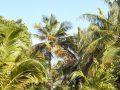 IruFushi_island_Garden_Beaches_0017